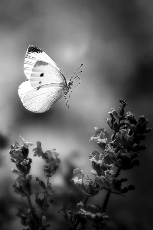 Crno - bijeli svijet Tumblr_n1ohvvTxVe1rmitcmo1_500