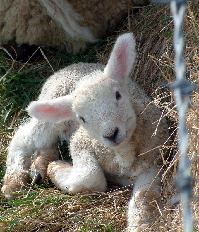 I životinje odmaraju - Page 2 Tumblr_msny8ctuTU1sqxdgzo1_1280