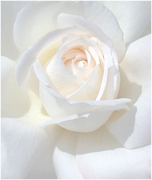 Volim bijelo - Page 18 Tumblr_n6xfpa0nNA1rel7fpo1_500