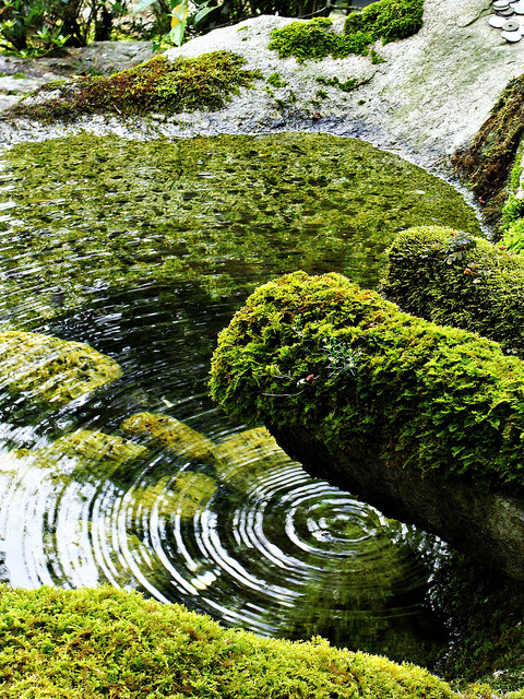 followthewestwind: Ripple by Box of Badgers on Flickr.