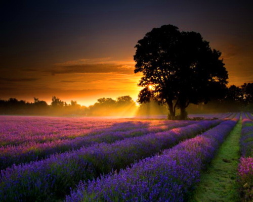 Zalazak sunca  - Page 2 Tumblr_lrt22rmzNY1qb30dwo1_500