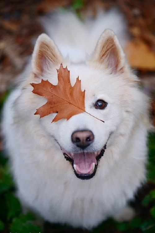 Empieza el otoño. - Página 3 Tumblr_ne7my5K4sR1qkfpxgo1_500