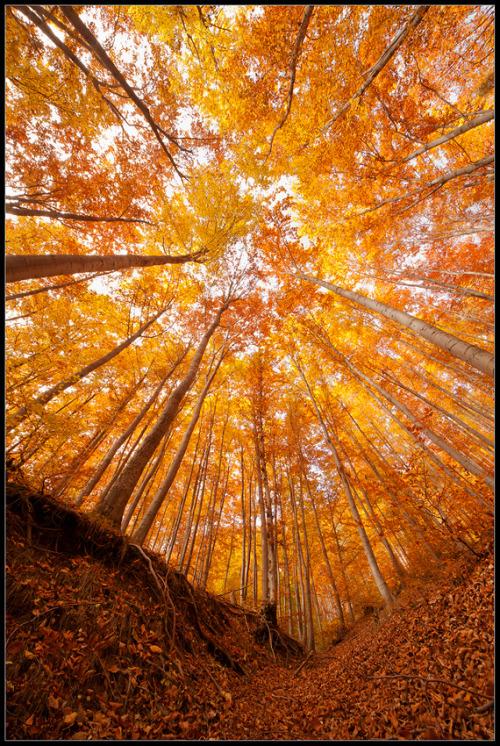 volim narančasto - Page 10 Tumblr_mcb35lo8Jo1r9lm96o1_500