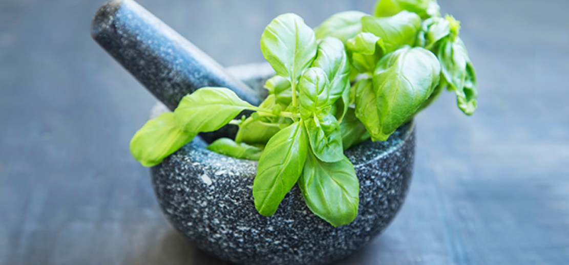 Holy Basil has 18 Amazing Medicinal Benefits Basil