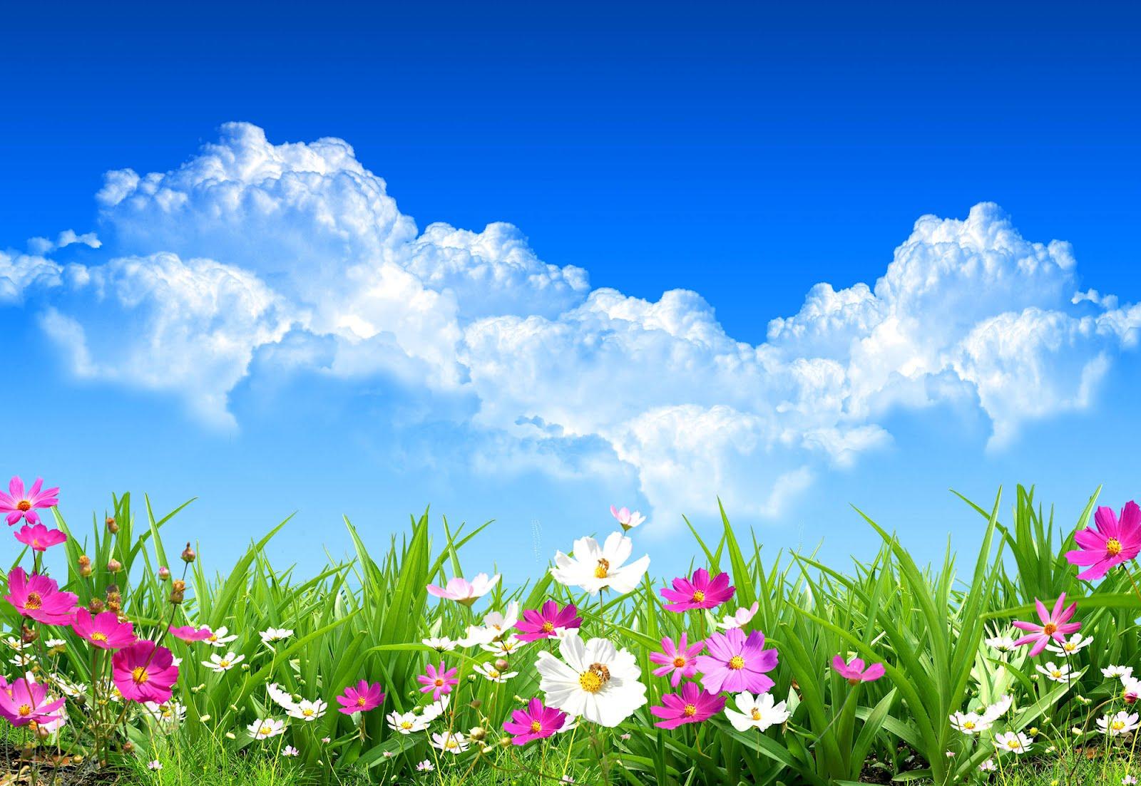 **hola primavera** Flores-de-primavera-spring-flowers-landscapes-paisajes-g