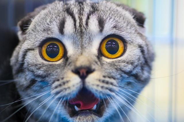هل القطط تملك تسعة ارواح 2