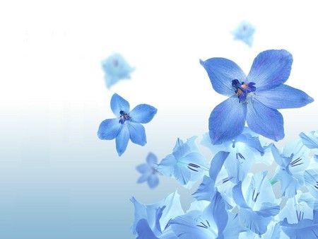 வால்பேப்பர்கள் ( flowers wallpapers ) - Page 6 Flowers-Wallpapers-30