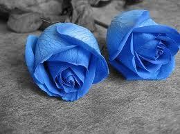 பட்டு வண்ண ரோஜாவாம், பார்த்த கண்ணு மூடாதாம்..! (புகைப்படங்கள்) Blue