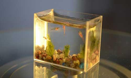 سمكة حية تظل في بلعوم صبي لمدة 14 ساعة Article-1360230-0D4DE917000
