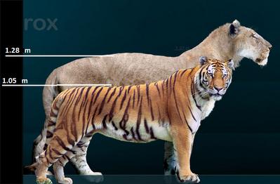 León gigante,actualmente extinto. Leon%2Bgigante%2Bcavernario