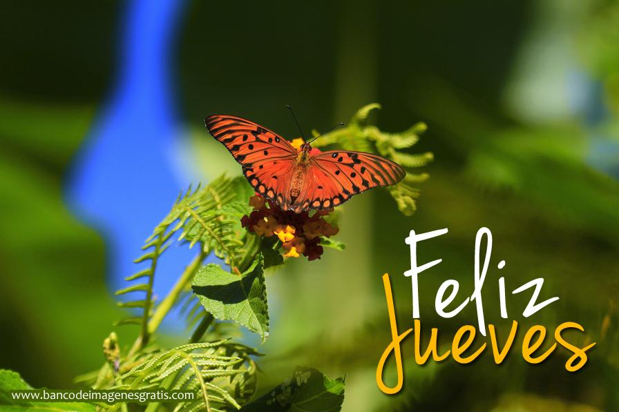 Bienvenidos al nuevo foro de apoyo a Noe #320 / 17.05.16 ~ 01.06.16 - Página 6 Feliz-jueves-mariposa
