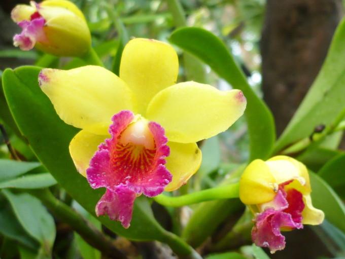 Cveće slike - Page 3 Orhideja22521685