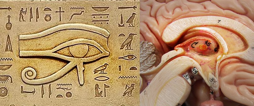 the hi¡… rise, the cube, diesnayeLands   …atheHoop… Eye_of_ra_pineal_gland