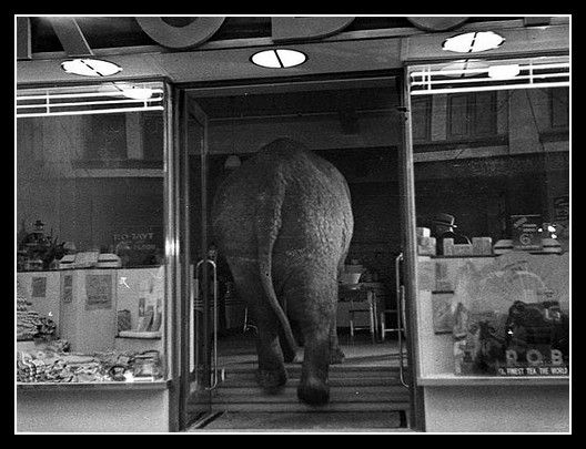 Un éléphant ça TRUMP énormément - Page 5 Elephant-thumb