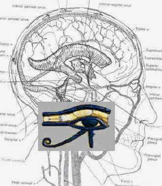 Spiritual Science Eye-of-horus-brain
