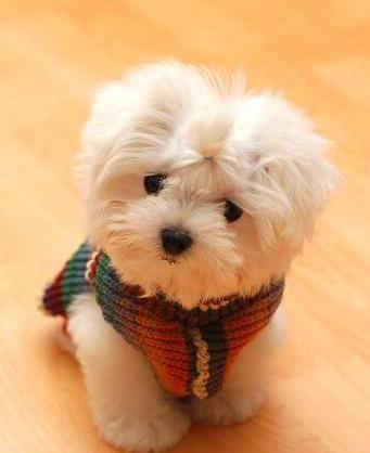صور كلاب الجزء الاول Dog-puppy-151