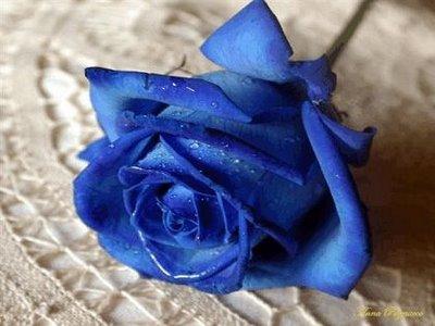 """""""""""""""... En azul..."""""""""""" Rosa_azul"""