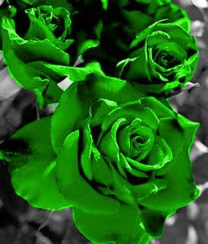 பட்டு வண்ண ரோஜாவாம், பார்த்த கண்ணு மூடாதாம்..! (புகைப்படங்கள்) Green_rose_by_Clarkkent5511