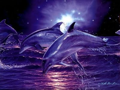 Everything You Need To Know About Both Of January's Stunning Full Moons Twilight-dolphins-wallpaper
