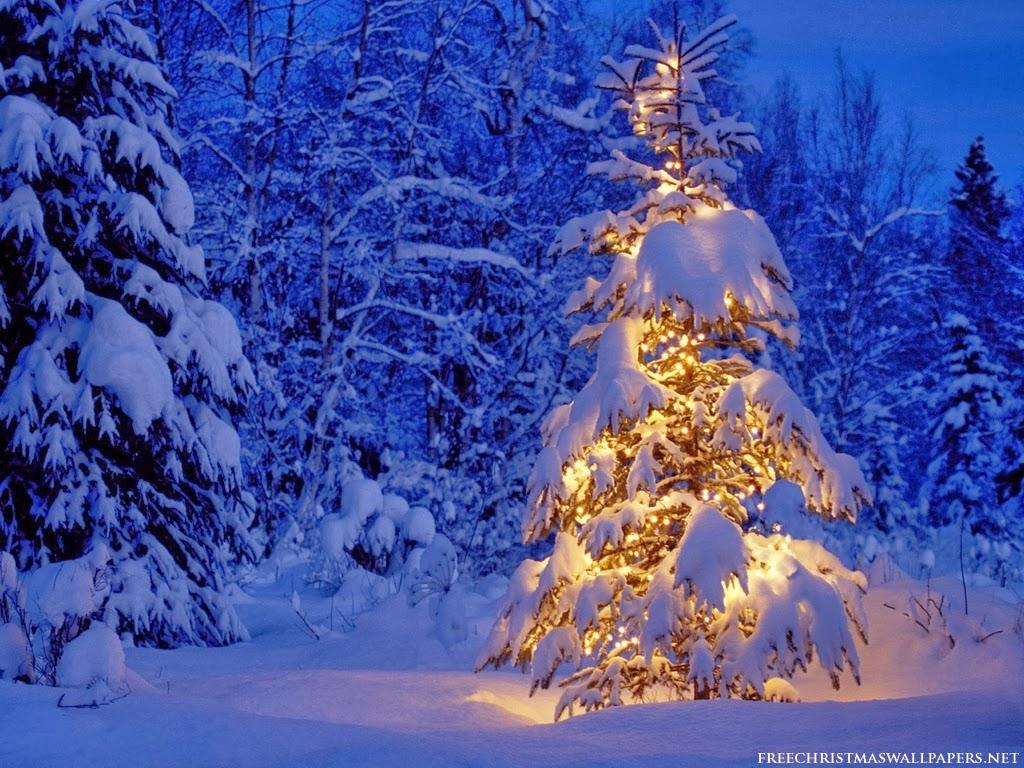 Le fil du partage  Christmas-tree