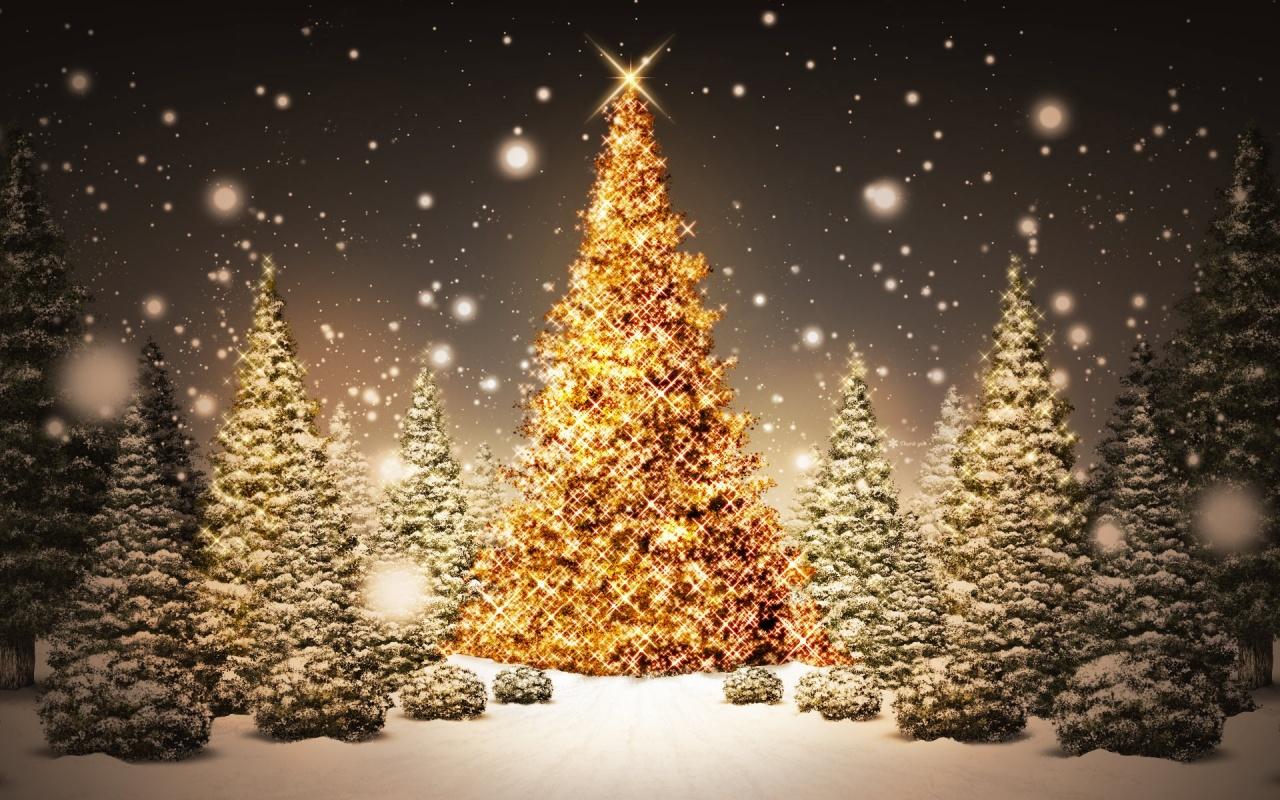 Bienvenidos al nuevo foro de apoyo a Noe #301 / 15.12.15 ~ 22.12.15 - Página 20 Fotos-de-arboles-de-navidad