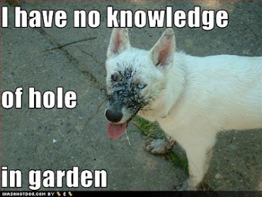 Senatorial Election Funny-dog-pictures-dog-claims-to-be-unaware-of-the-hole-in-the-garden