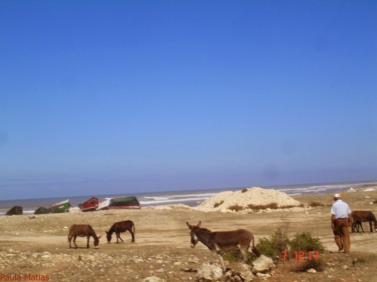 marrocos - Marrocos 2014 - O regresso  DSC03221_new