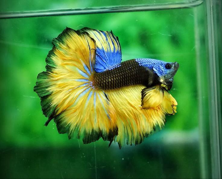 Mon aquarium 3ec859e9d4510e142b80b35a834137ec