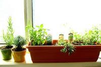 عمل حديقه اعشاب بالمطبخ بنفسك Images