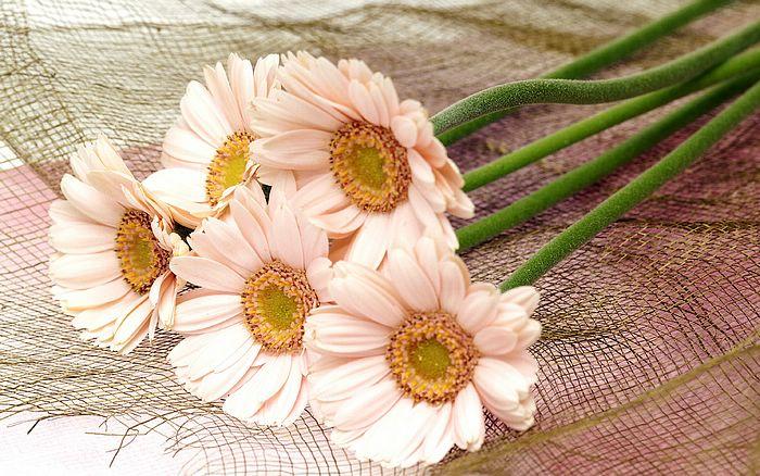 வால்பேப்பர்கள் ( flowers wallpapers ) 01 - Page 5 1440x900_High_resolution_flower_art_143655