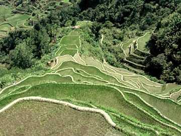 Filipini Pirincane%2Bterase