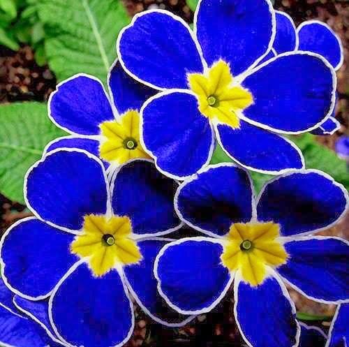 Magično cveće! Untitledattachment00046