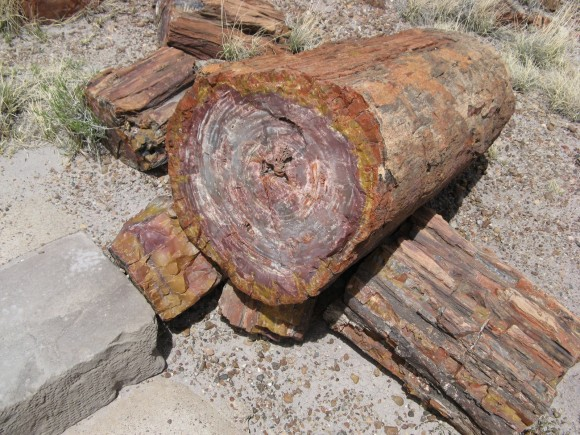 أشجار تحمل أسرار الماضي IMG_1831-580x435