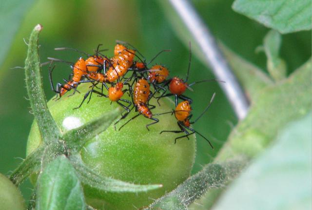 Bugs, Good or Bad? Bugbabiesblog