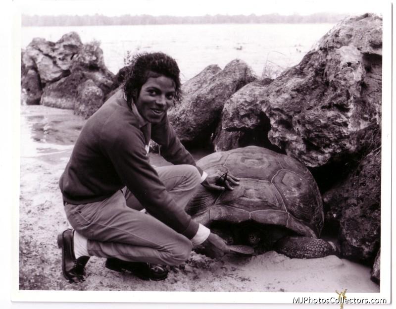 Michael e gli animali!! - Pagina 5 MJ-and-Turtle-michael-jackson-16890004-800-624