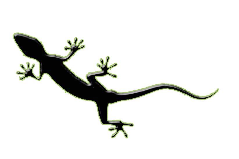 Animales, todas las especies Lagartija2