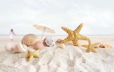... rincones para ... perdernos .... - Página 2 Starfish%2Band%2Bseashells%2Bat%2Bthe%2Bbeach-recuerdos-de-mis-vacaciones-por-la-playa-de-arenas-blancas----s