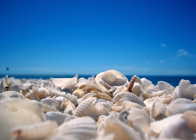 4 شواطئ صدفية مذهلة حول العالم Shell-beach-australia-6%5B2%5D