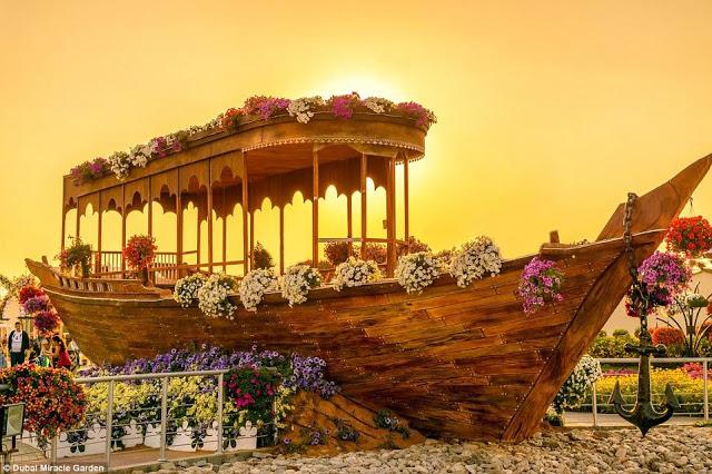 DUBAI MIRACLE GARDEN  5