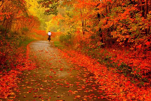 Natyra ne foto!!!!! Autumn1