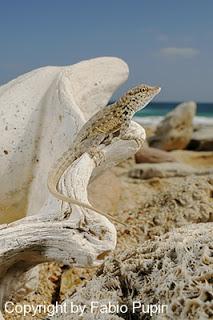 Un recorrido por nuestro planeta: asombrosas imagenes. - Página 2 Socotra-article