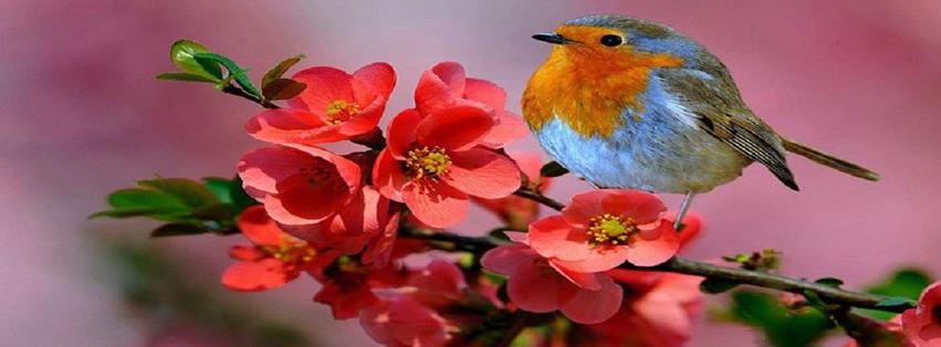 AIRE  FRESCO....! - Página 11 Pajaro-flores
