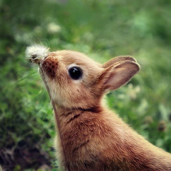விலங்குகளின் -வினோத படங்கள்.. - Page 2 Cool_Animals_photos_Funny_and_cute_animals_22