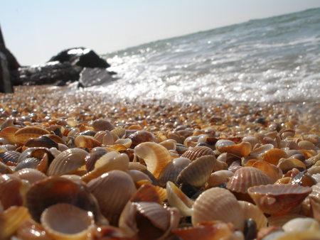 4 شواطئ صدفية مذهلة حول العالم 430427-bigthumbnail
