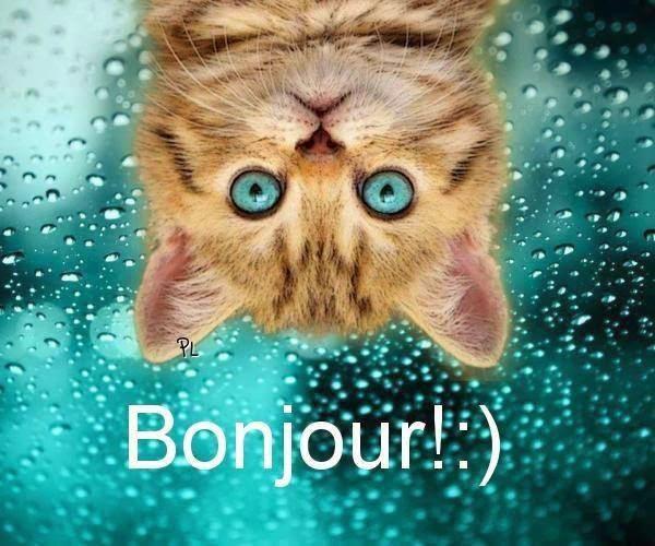 Vendredi 11 novembre Message-de-bonjour-dr%C3%B4le