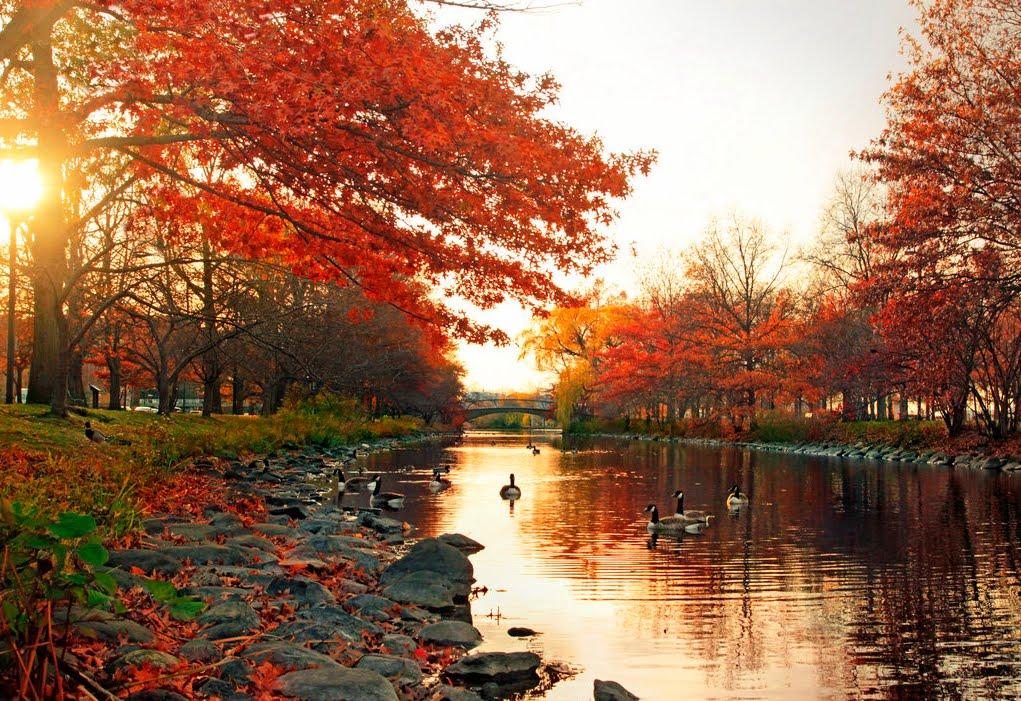 UNA NUEVA ESTACIÓN........OTOÑO LANGUIDO ..... - Página 7 Los-colores-del-oto%25C3%25B1o-por-el-rio-paisajes-naturales