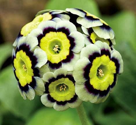Magično cveće! Untitledattachment00055