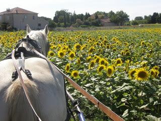 """THEME D 'AOUT 2012 ...""""des chevaux et des fleurs """" - Page 2 P7030129"""