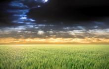 Le Roundup et le glyphosate GMOfieldstorm1-220x141