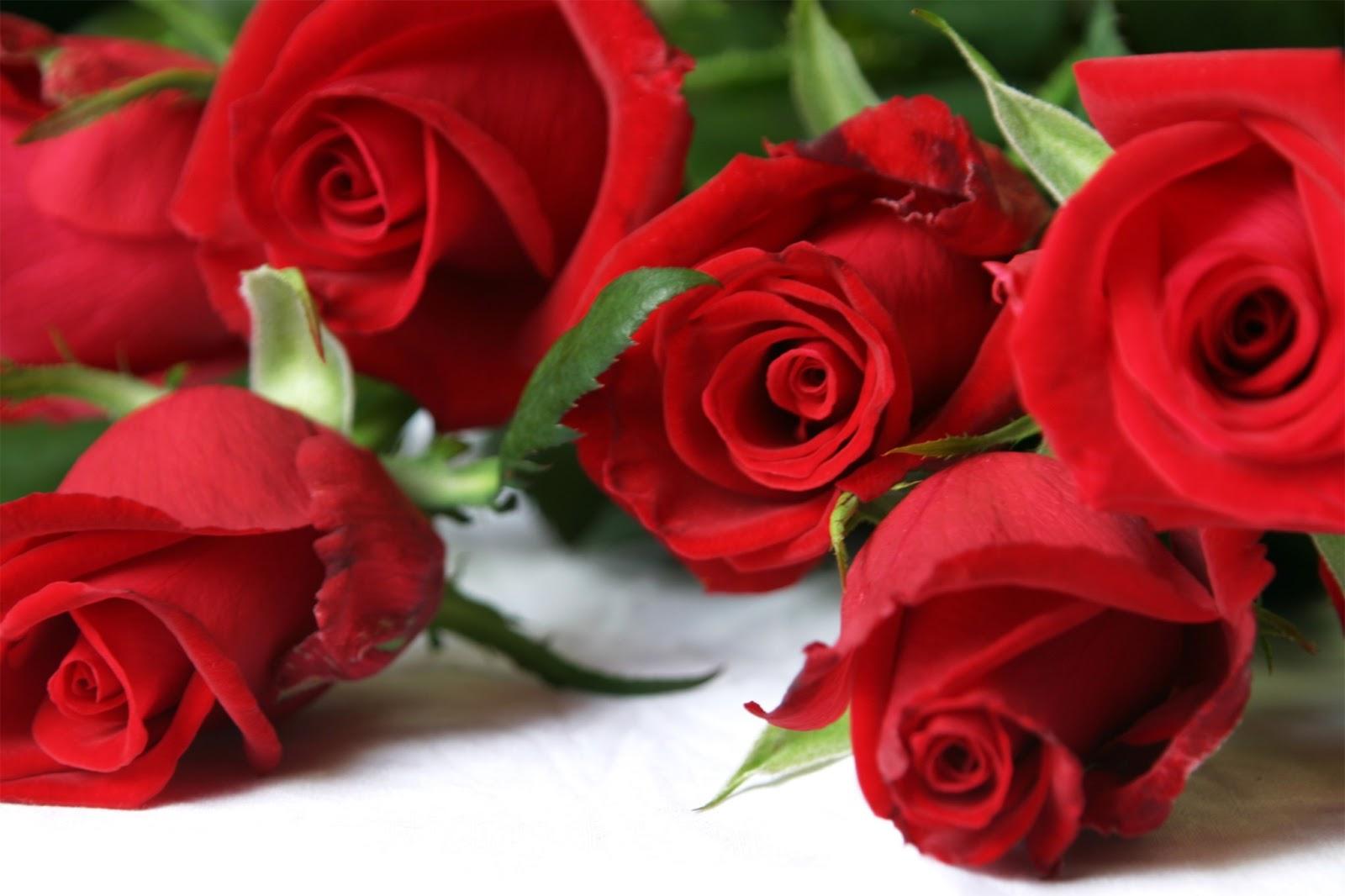 في روحك  وردة لمن   ترسل عطرها  / إهداء  لمن تحب بلغة الورد - صفحة 7 File0001386550794